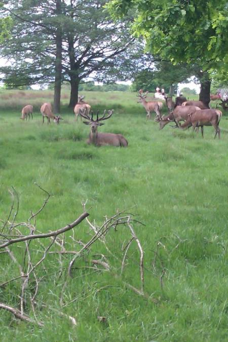 RichmondPark2